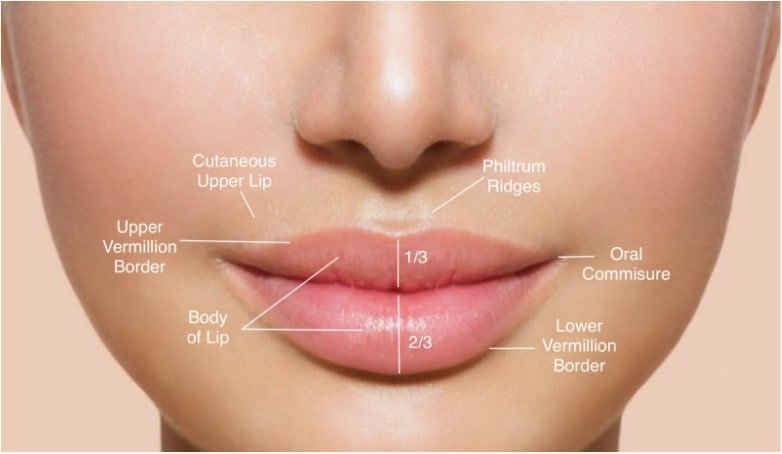 Picture of a lip map